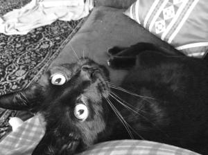 caturday's child 1