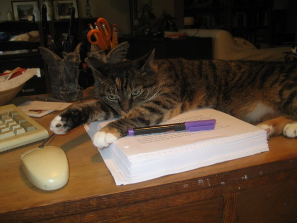 """Pandora thinks I need more coffee before I""""m allowed to touch the day""""s work...."""