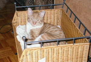 The Booomer, waking up from a nap.  If he outgrows that basket, we're all in trouble...