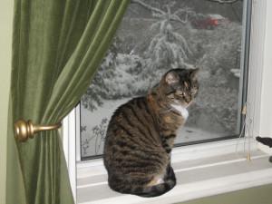 Pandora and snow, December 2008