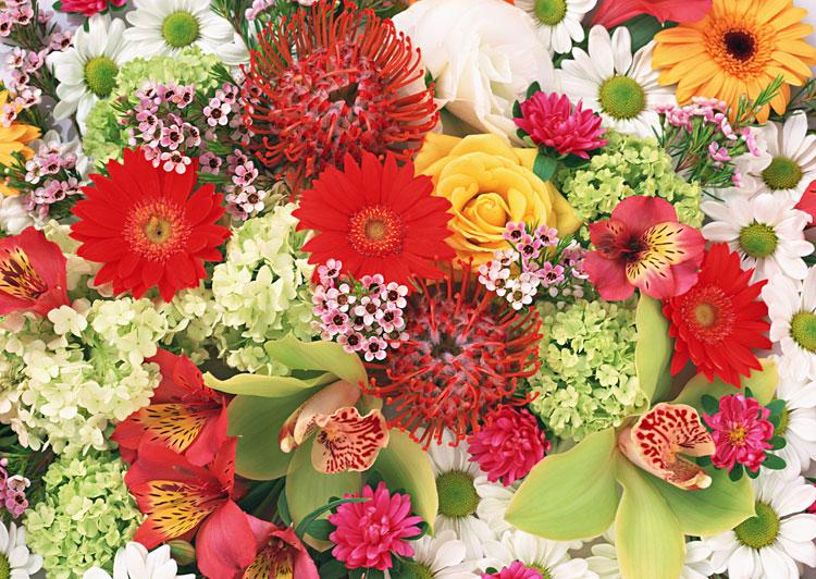 покажите картинки цветов разных цветов папы только зимой