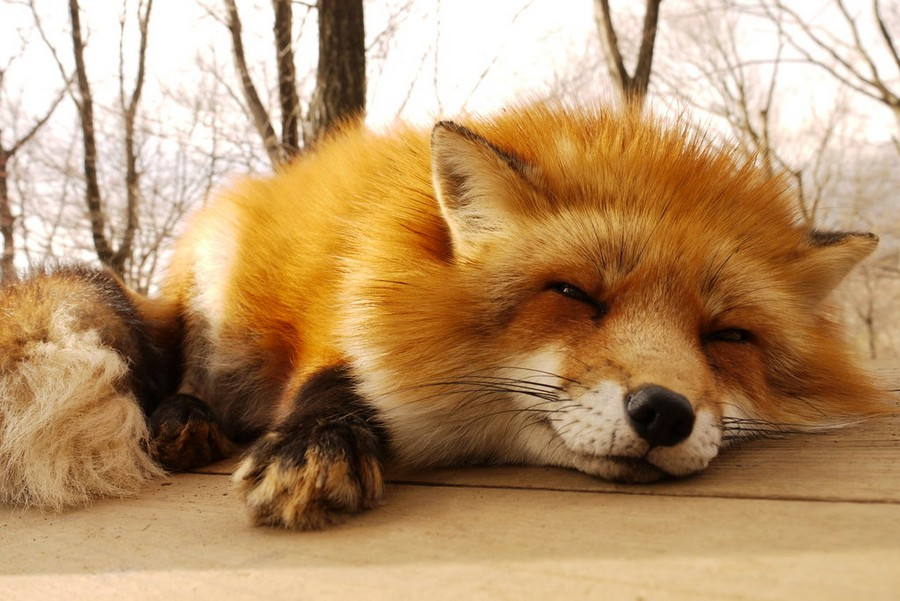 Картинка лисичка прикольная, для пасхи поздравлениями