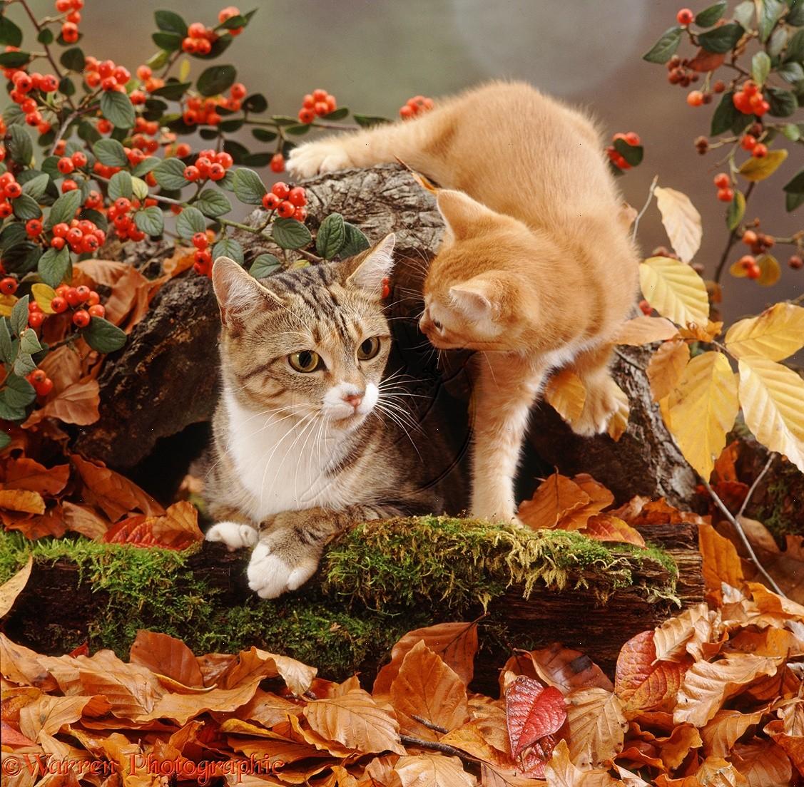 Поздравления, открытки осень и котики