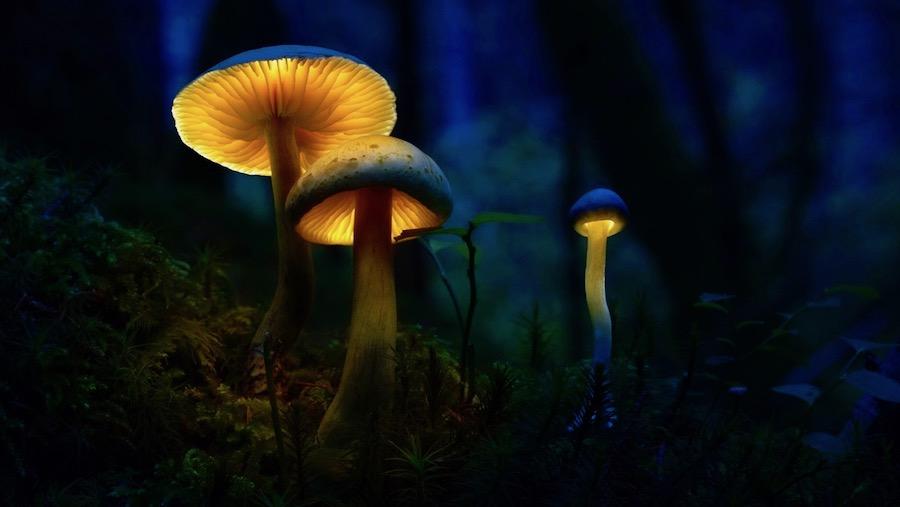 Glowing-mushrooms-04.jpg