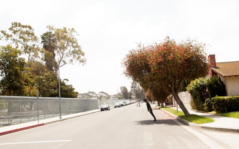 Фотографии деревьев