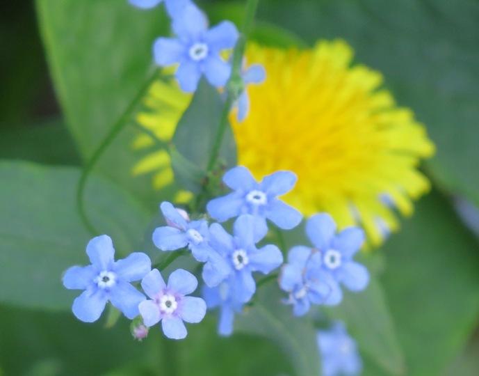 желтое с синим