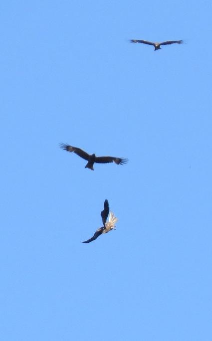 Орлята учатся летать