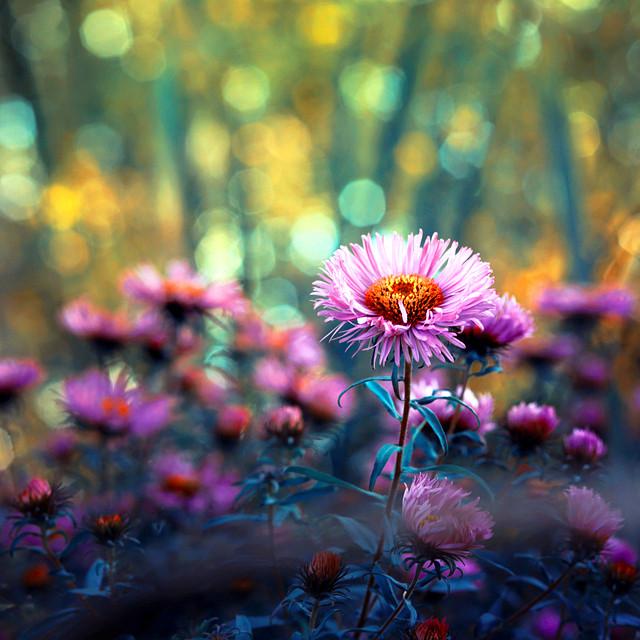 autumn_i_by_kokoszkaa-d6omyrw[1]