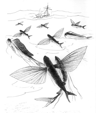 Летающие рыбы.jpg