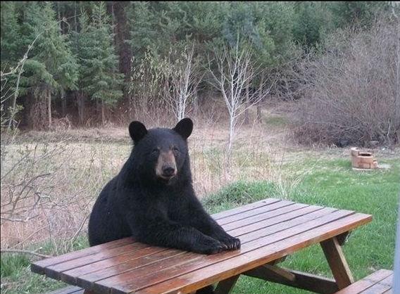 медведь за столом-2