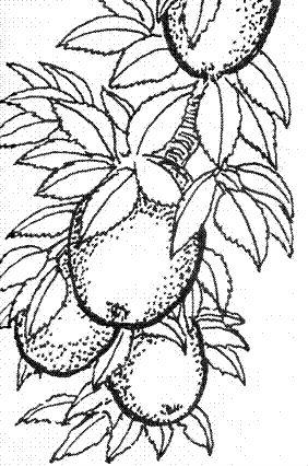 Яблоко-3