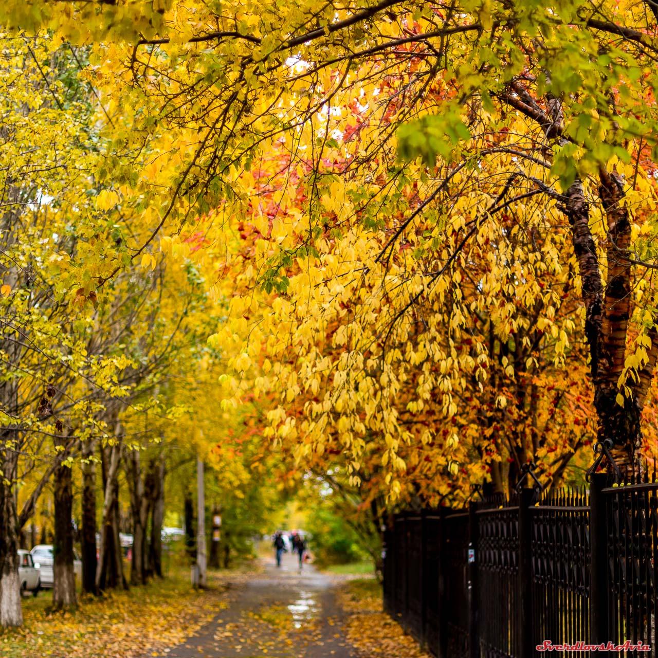 Осень пришла окончательно.
