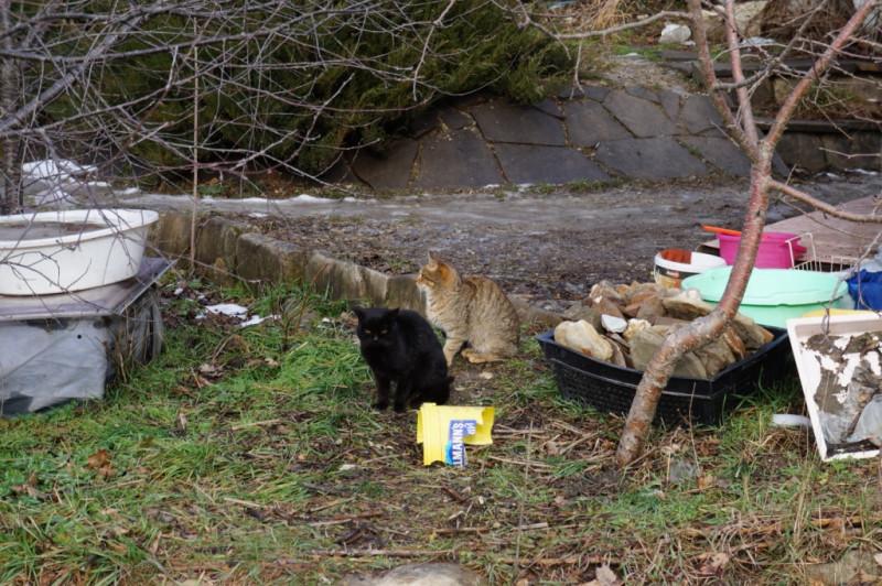 Экопоселение Возрождение коты