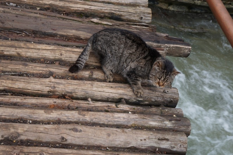 Кот на мосту