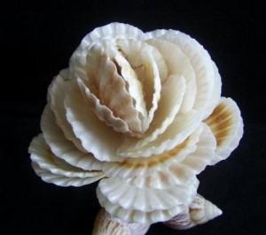 Изделия из морских ракушек своими руками фото 399