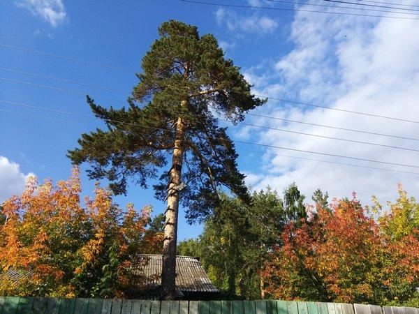 осень-1.jpg