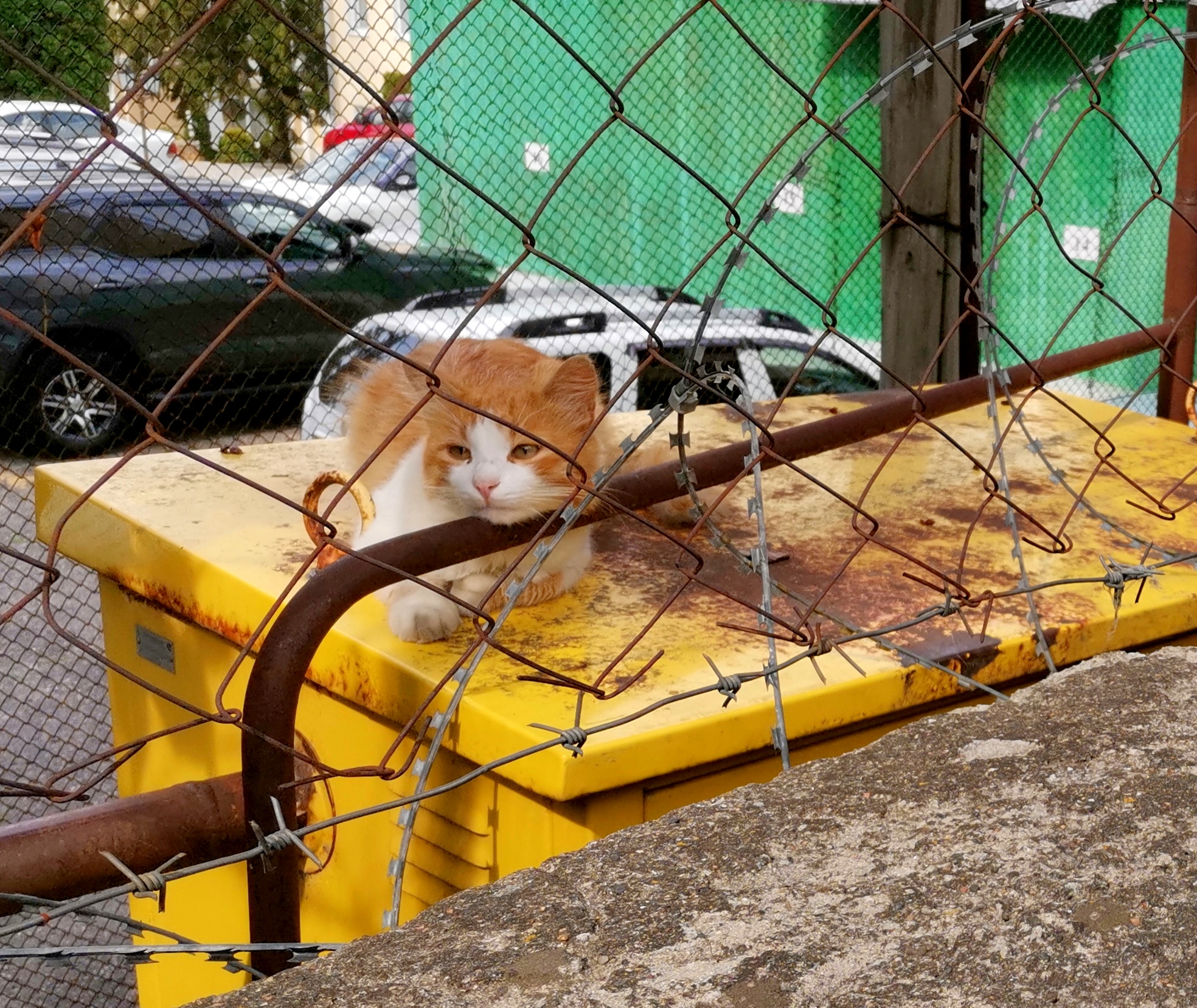 Вчера в Железноводске было столько котиков! А сегодня в Кисловодске удалось выбрать только двух...