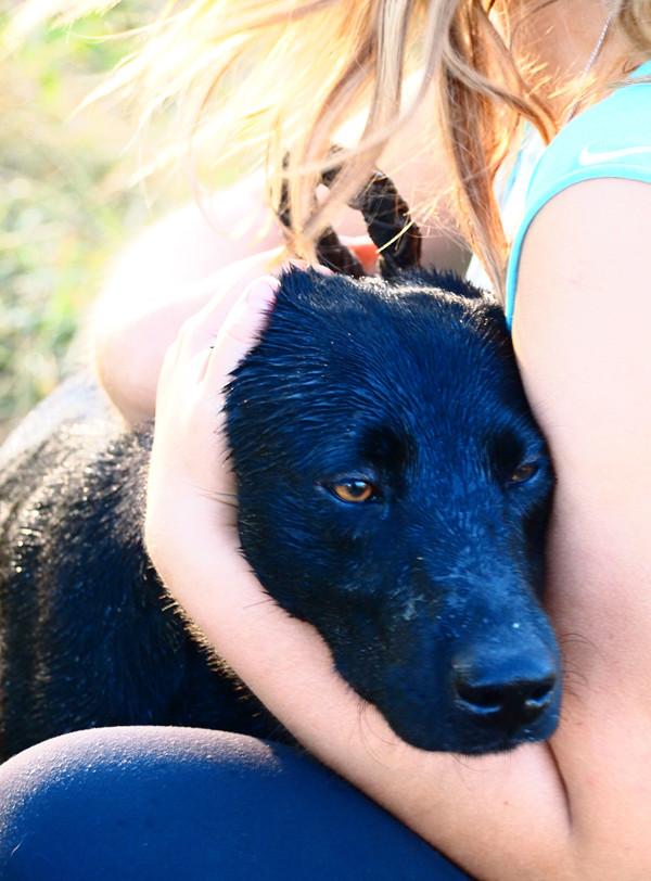 Джон Фишер О Чем Думает Ваша Собака Скачать