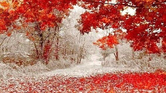 Первый снег 4