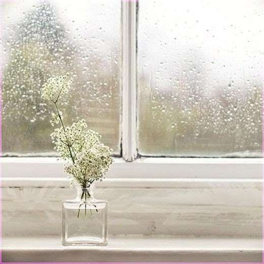 Белый цветок на окне