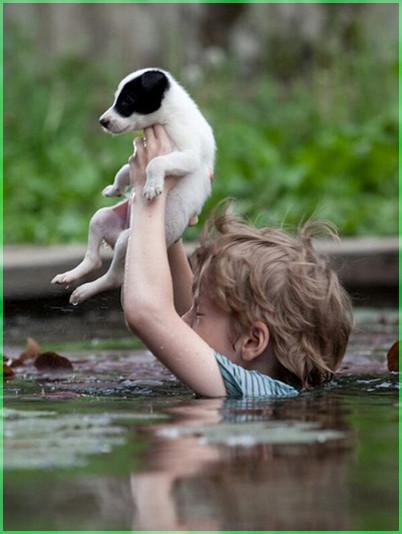 Спасая щенка