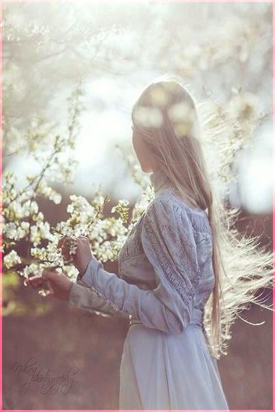 Белой акации цветы