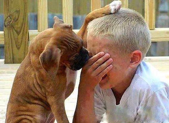 Не плач