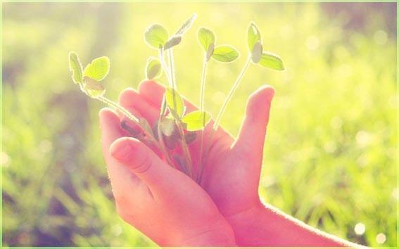 Трава в руках