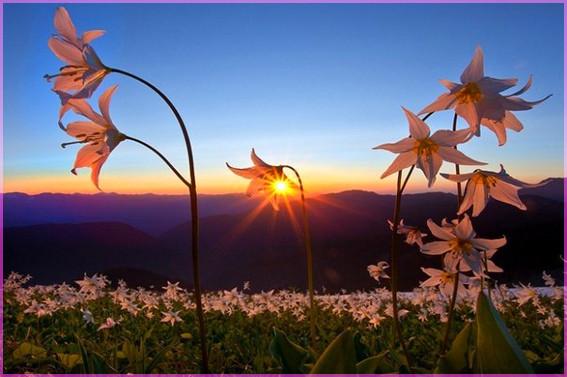Закат в цветах