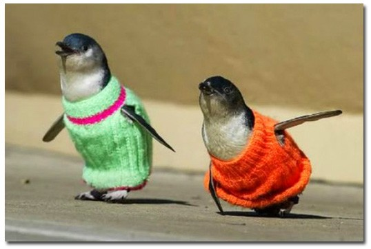 Пингвинчики 2-2.jpg