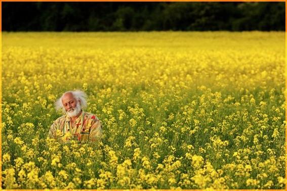 В жёлтых цветах