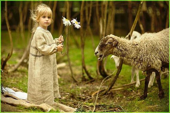 Девочка и овечки
