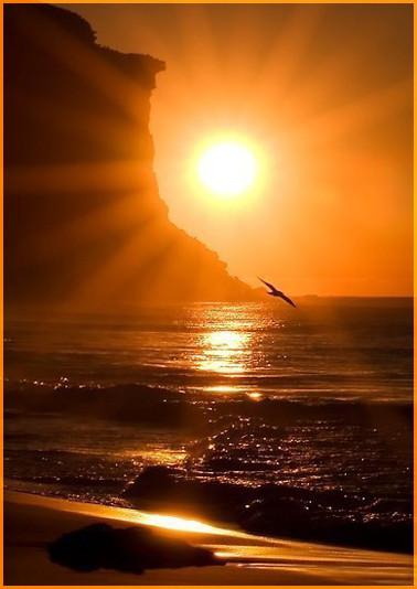 Солнце и чайка