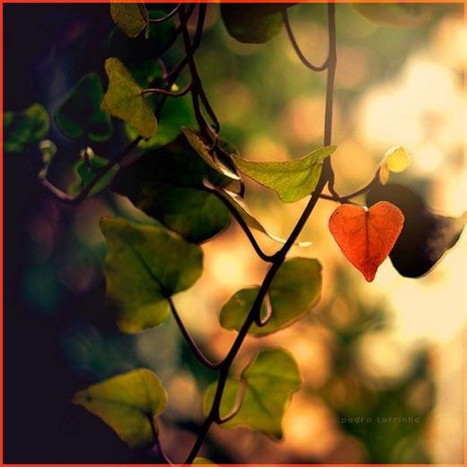 Красный листочек