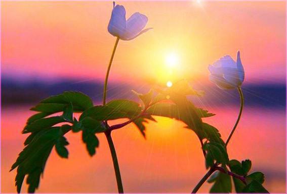 Два цветка и солнце