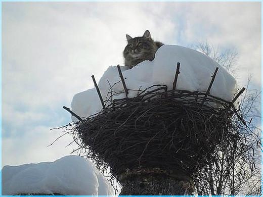 Зимний дозор