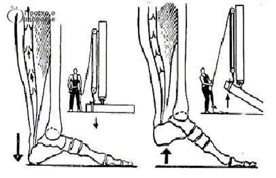 Виброгимнастика