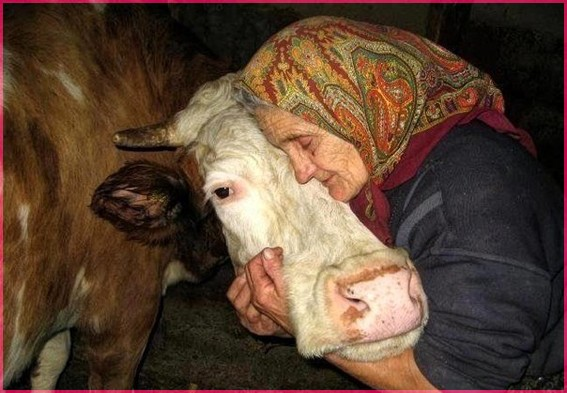 Бабушка и бурёнушка