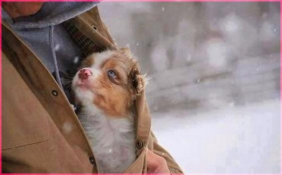 Брошенный щенок