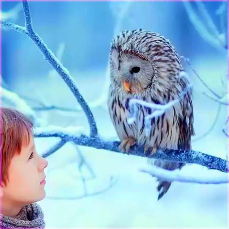 Мальчик и сова