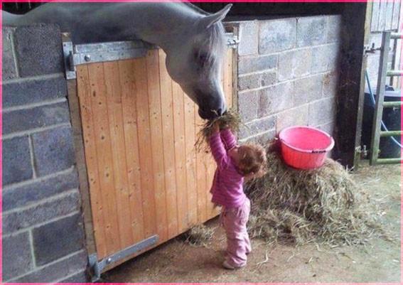 С лошадкой 3