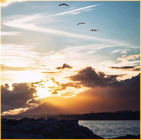 Чайки над морем