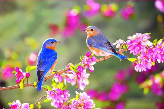 Две птички 5