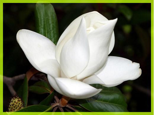 Белый цветок