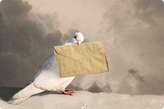 Голубь с конвертом