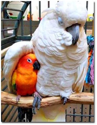 Два попугая 2