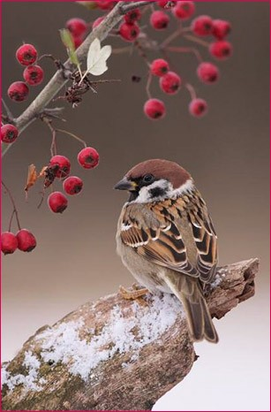 Птичка 5