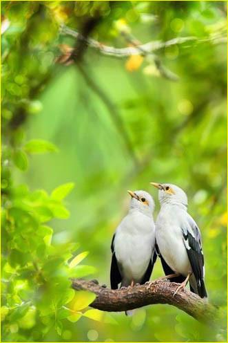 Две птички 4