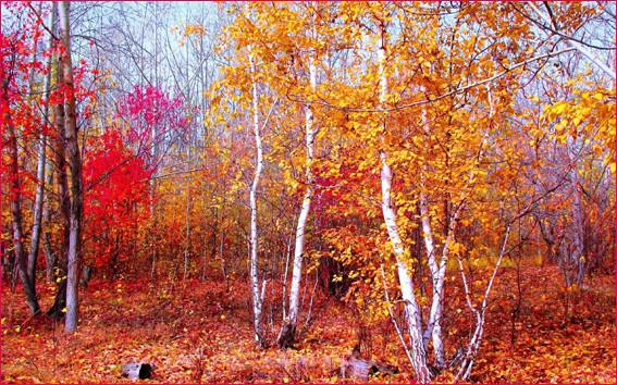 Яркие краски леса