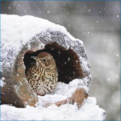 Птичка зимой